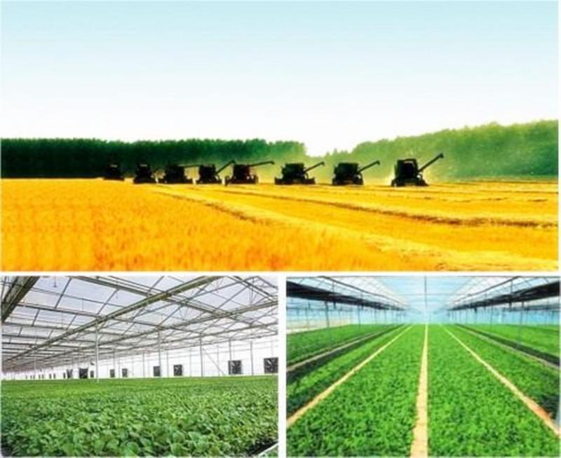 未来十年农村适度规模化经营后,8亿农民该何去何从?