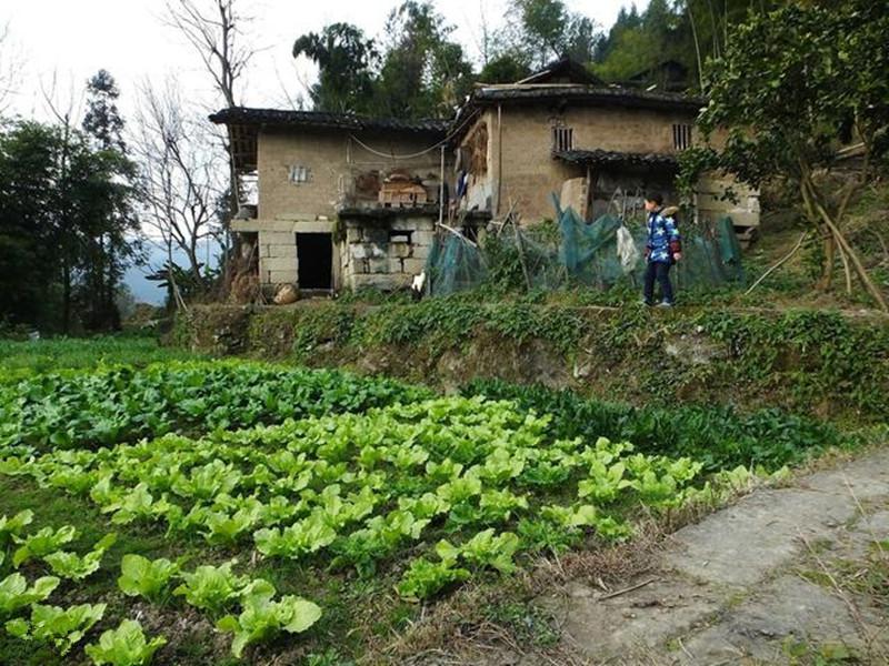 不久之后,农村会发生很大的变化,8亿农民会面临3种结局