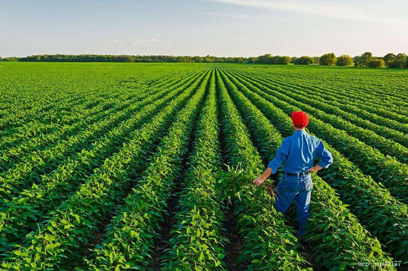 一周回顾|农业产业10大盘点:国家推乡村振兴战略落地;农业服务平台迎融资热