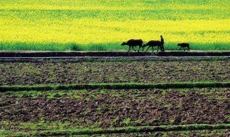 农村三级改,这6种农业生产方式放心做,农民生活节节高