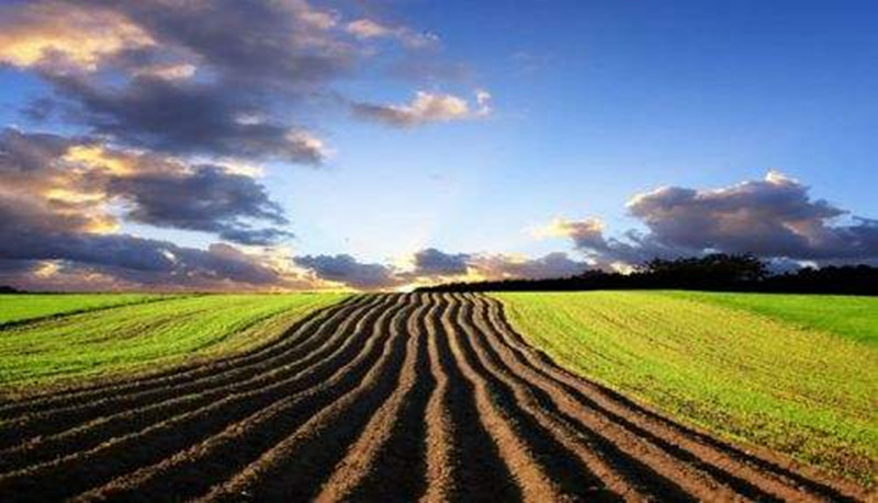 规模化的死胡同PK农业服务规模化的看着还行!