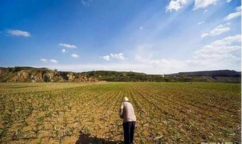 """农村最新规定:""""禁止""""农民""""这样""""使用基本农田,否则没收!"""