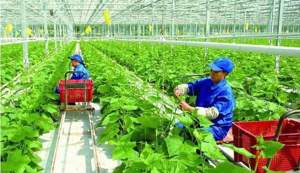 """2018农业改革:想要补贴,先拿""""三证"""""""