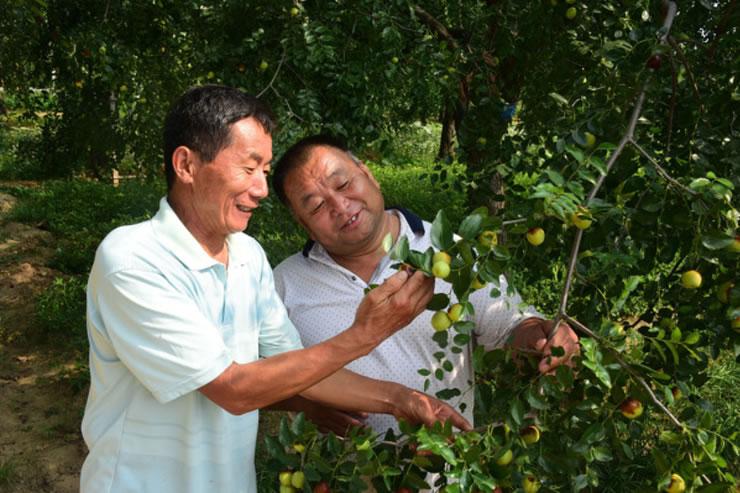未来10年,农业改革将淘汰50%农民