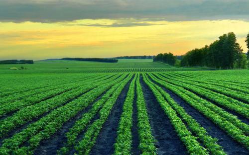 重磅|农村土地8大赚钱方式、4大商机已形成,看土流网、聚土网、神州土地等如何淘金