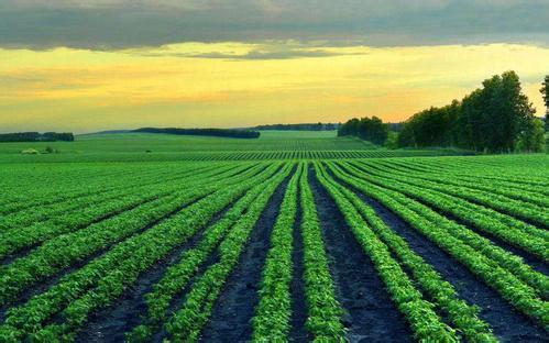 土地确权结束后,这4件事农户要注意!