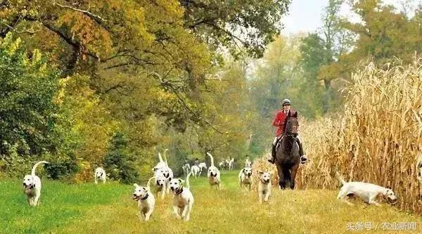 新模式|共享农庄的4种模式,100个盈利点!
