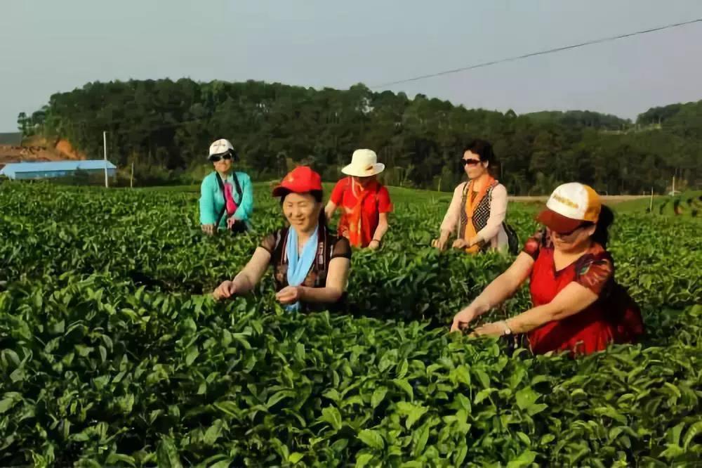 政策干货|国家积极推行农业税费减免(附减免清单)