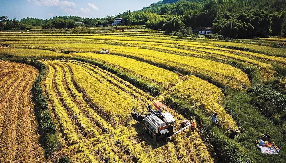 农业投资需谨慎!毕竟,中国还面临这10大问题