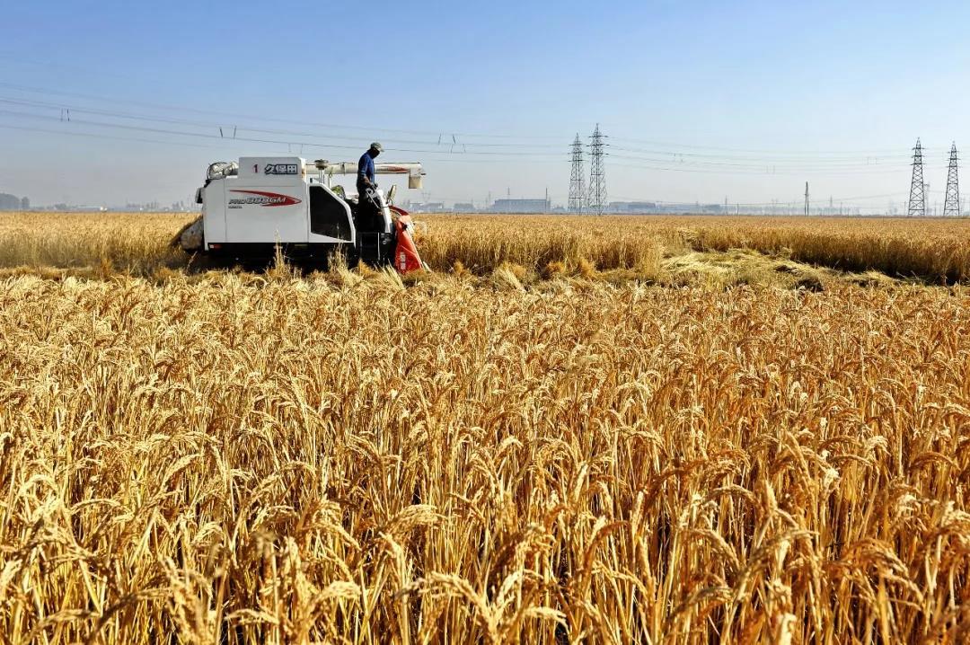三农日报|国家再次重视种质资源;研究称:未来的农民可能是程序员