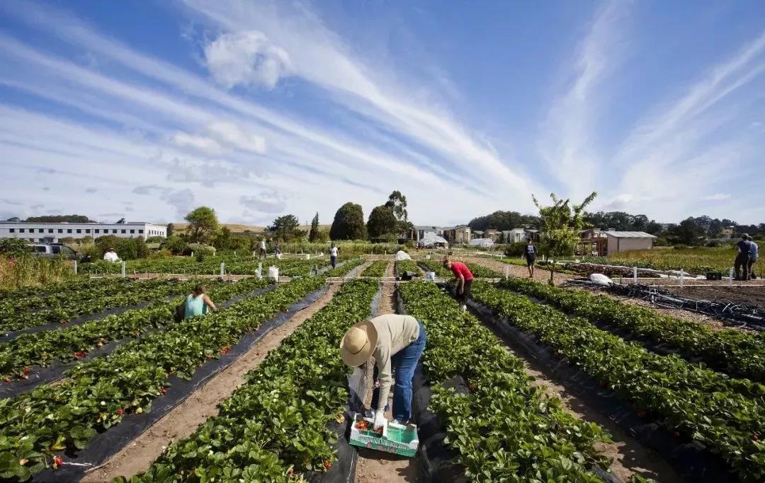 三农日报|草种产业或成未来的朝阳产业;报告:城市年轻人正成为乡村游的主力军