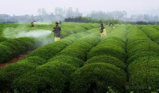 重磅雄文|中国农业的十大战略