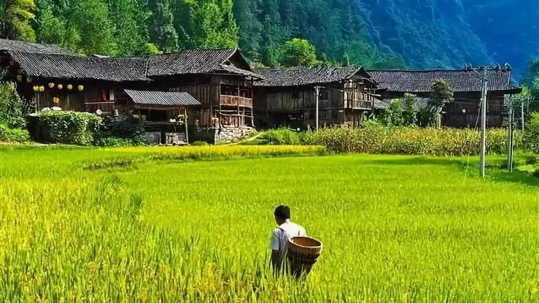 学者观点 温铁军:乡村振兴战略中如何实现产业兴旺?