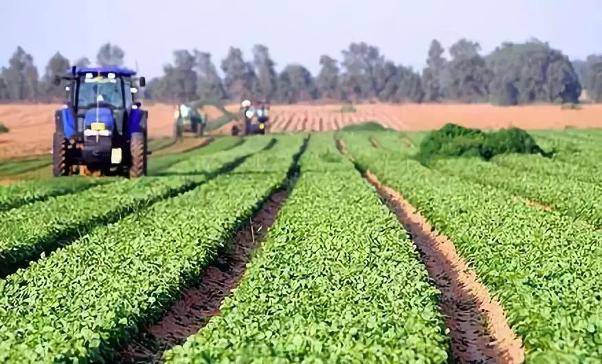 党国英:中国农业经营方式革命悄然兴起!