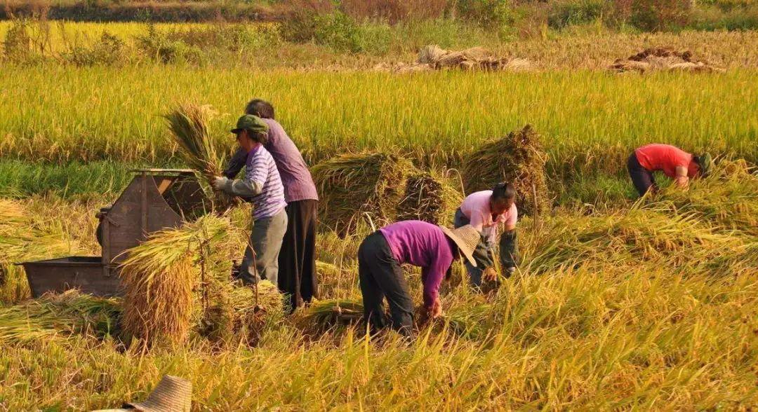 阎世平等:我国小农户经营的出路