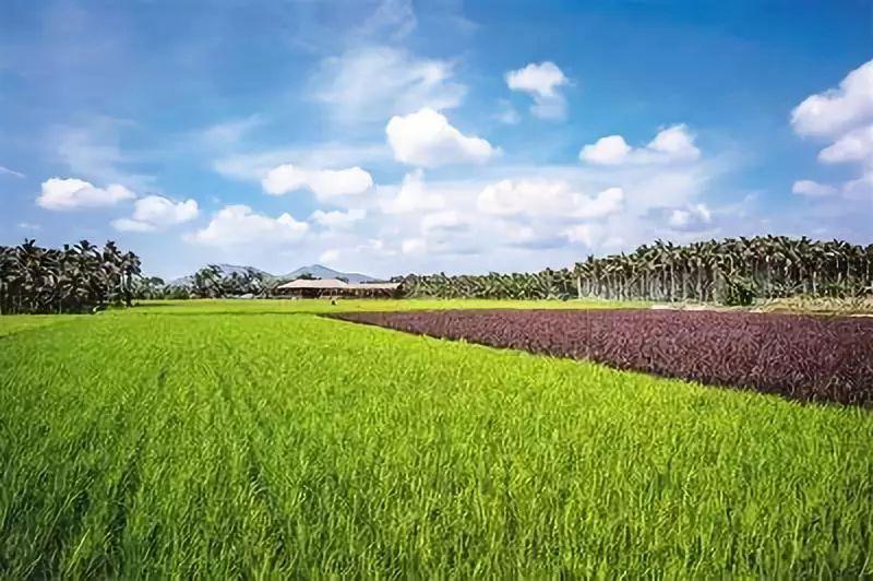 农业农村部公布72项农业主推技术(全名单)