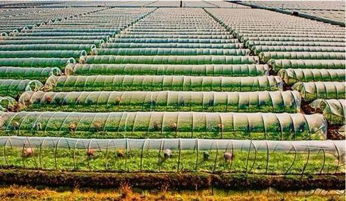农业部官方征集:数字农业农村新技术新产品新模式速来!