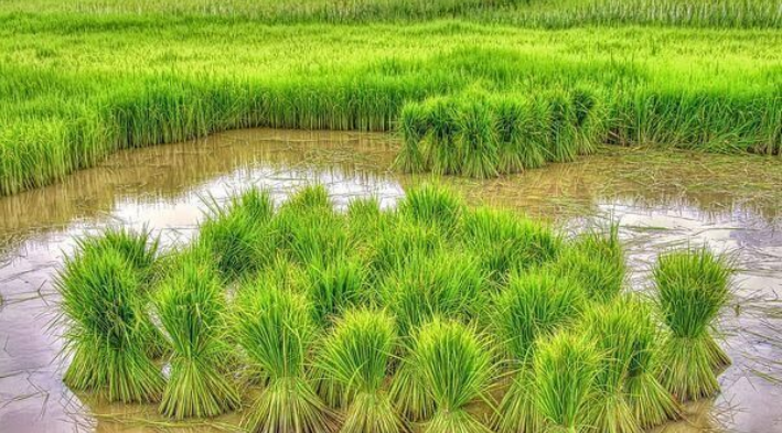 农村现在做什么生意赚钱?农村养殖、种植项目浅析