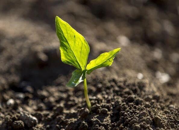 政策加速器|农业部:支持乡村企业登陆资本市场