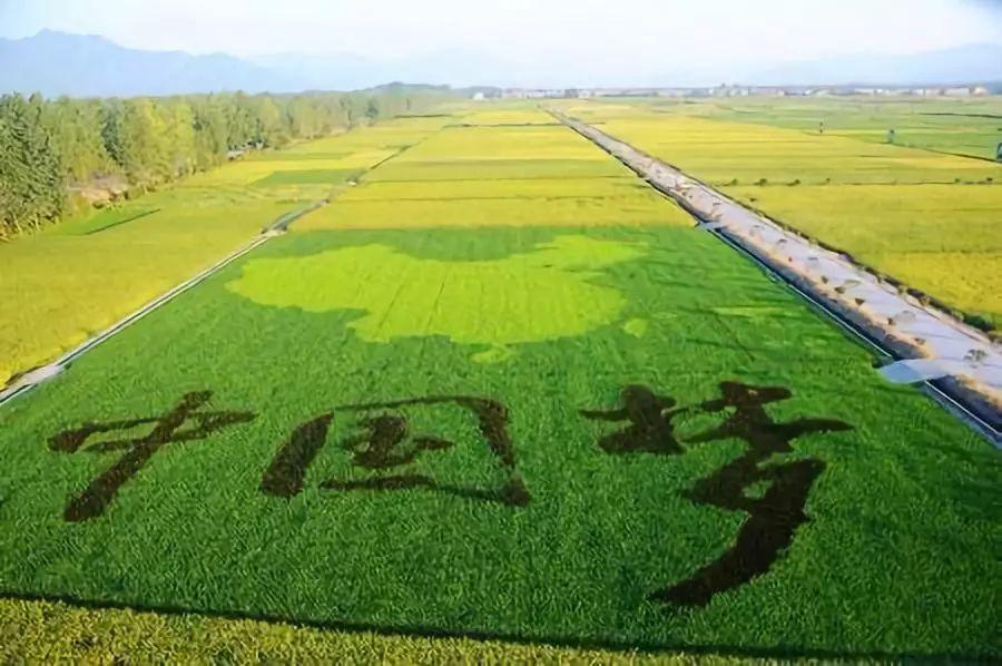第六批299家农业产业化国家重点龙头企业公布!