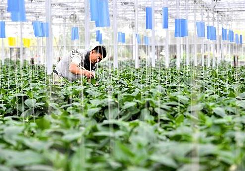 三润农业吕科:企业如何在乡村振兴中发挥作用?