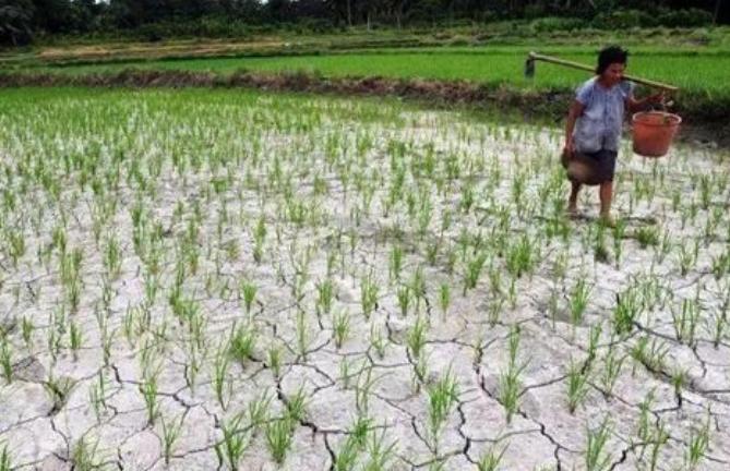 谁能拯救农业、农村、农民?