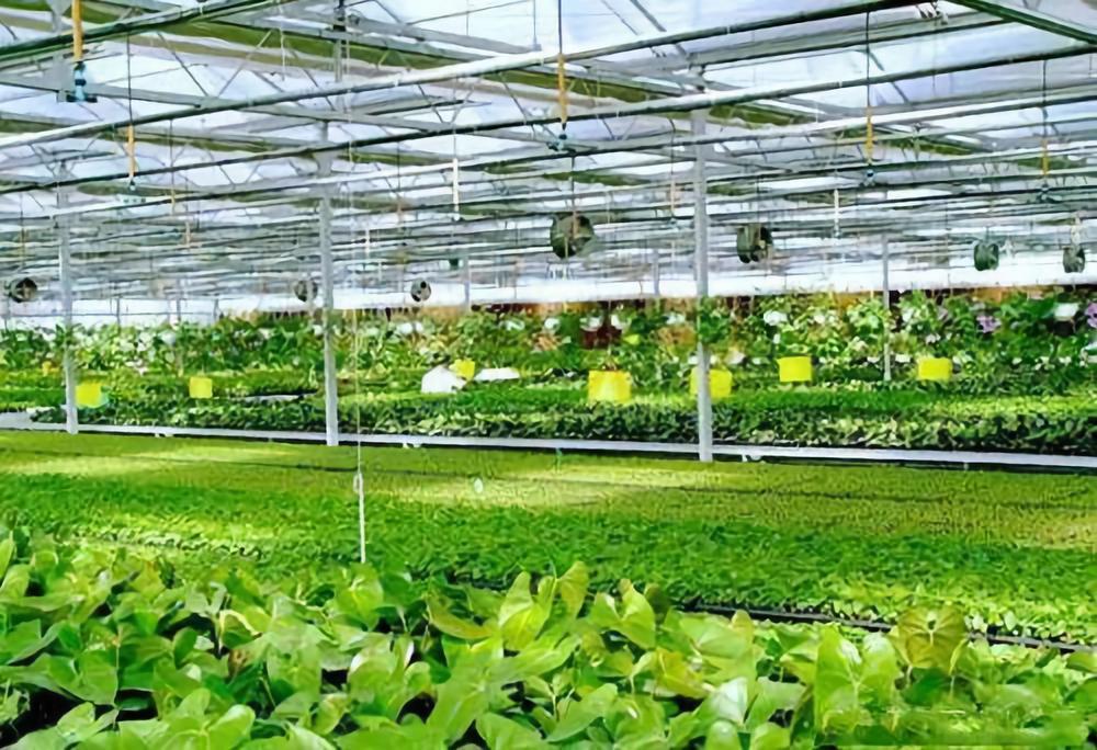 自然资源部等:设施农业可以使用一般耕地,不需落实占补平衡!