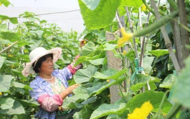 未来农业三大发展趋势,农村人的创业机会,抓住一个就能致富