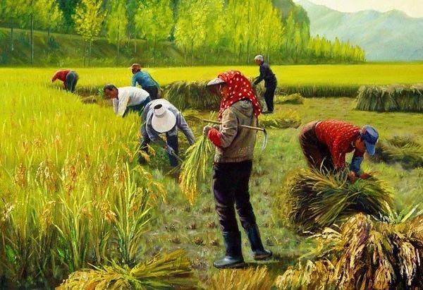 思考!我国农业的最终出路是集体化