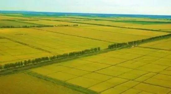 """未来十年农业改革将""""淘汰""""一半农民,你准备好了吗?"""