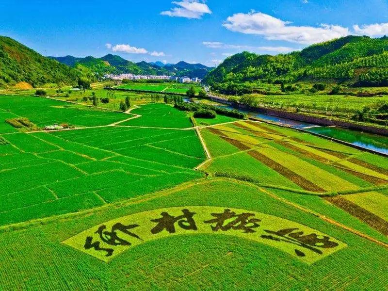 【大佬解读】蒋和平等:乡村振兴背景下我国农业产业的发展思路与政策建议