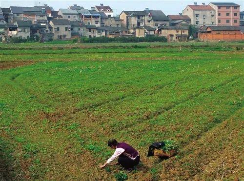 【大佬观点】张红宇:以产权改革促农村二次飞跃