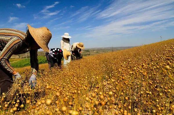 【大佬解读】刘石:三农问题核心在农业,中国要探索小农经济的现代化路径!