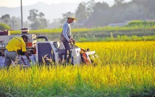 【政策】农业农村部 财政部发布2020年重点强农惠农政策