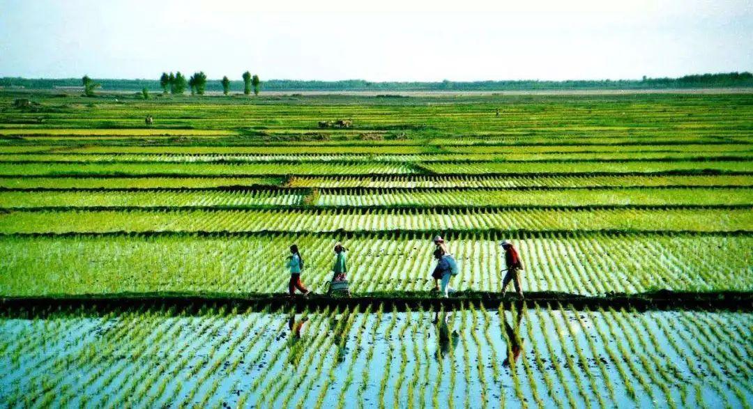 【政策】中央下发重磅文件:地方卖地收入最低8%要用于农业农村