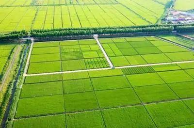 【农业政策】农业部安排867亿元,进一步支持高标农田建设