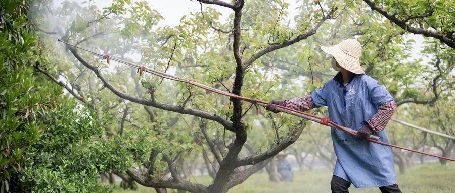 【热点解读】中国农业政策的13个观点!每一点都跟你有关!