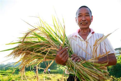 【专家观点】马晓河等:农村产业融合发展阶段分析及其启示