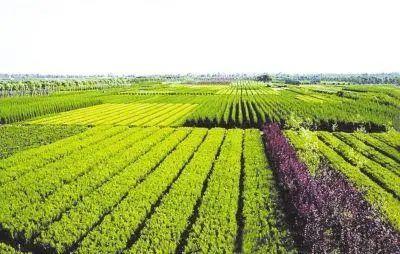 【专家观点】张天佐:乡村振兴应重点研究关注的9类乡村产业