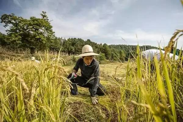 【产业机会】中国农业暴富的机会点!