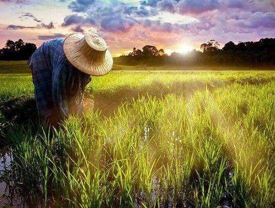 大趋势!农民变成产业工人,将会引发中国农业向上