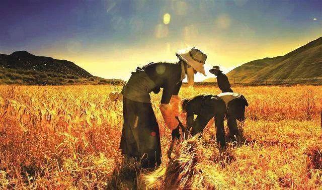 【行业预测】未来10-15年,中国很可能成为全球最发达的超级农业强国