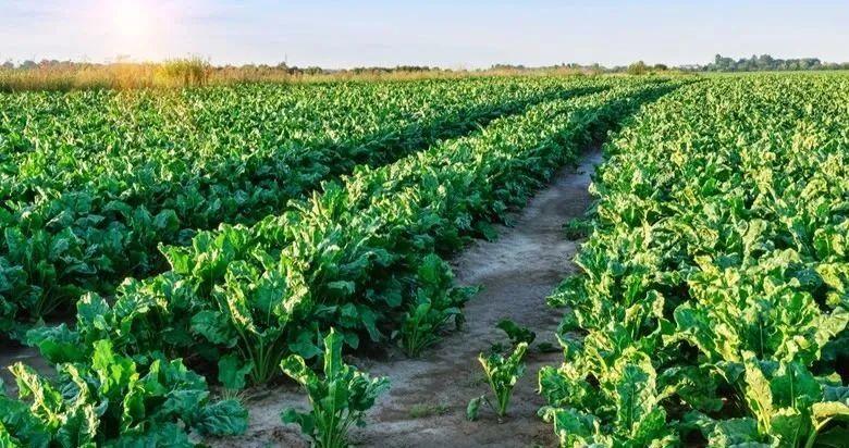 三农日报|中国农科院:推动生物育种产业化;陈锡文:乡村振兴须大力发挥乡村功能