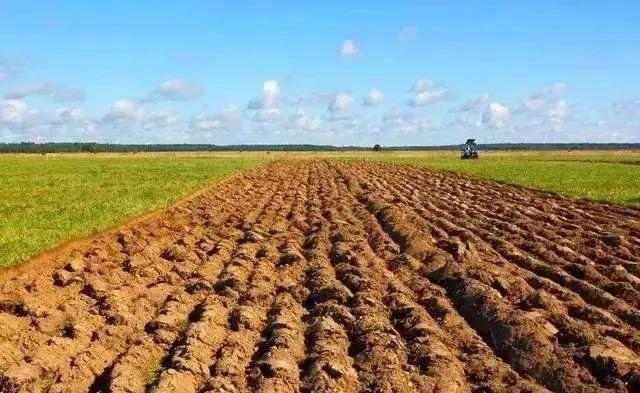 中国农业现代化的十大困境,每一个都很致命!