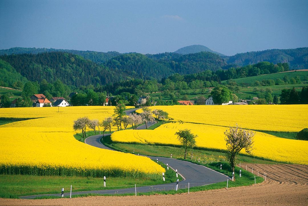 【政策解读】2021年农业农村部重点扶持的13个乡村产业发展项目