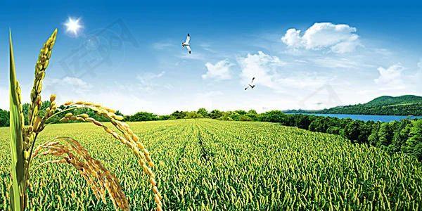 【两会农业】12位代表、30多份涉农精彩提案,未来农业农村可期(独家梳理)
