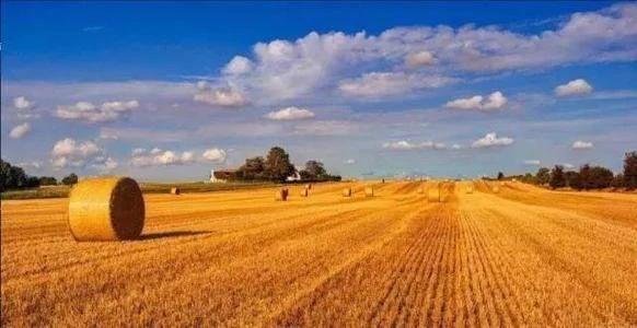 """国家""""十四五""""规划和2035年远景目标纲要(农业农村领域节选)"""
