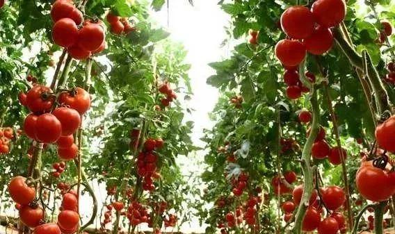 """乡村振兴新模式:""""4+1+N""""农业产业融资模式(收藏+转发)"""