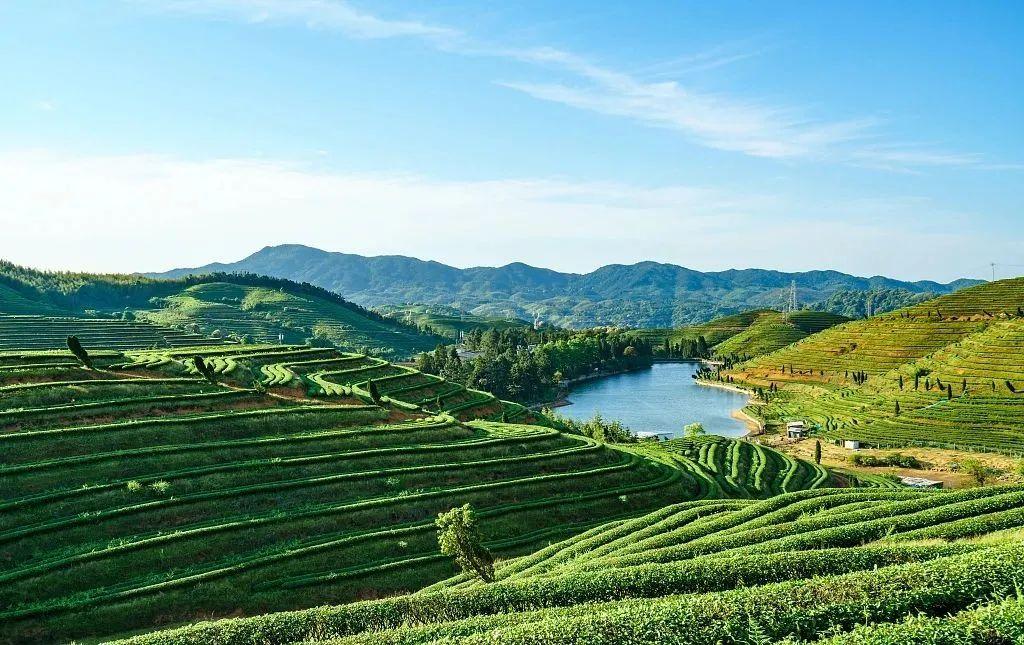 【乡村振兴】 全国811个农业产业强镇,有什么经验可学?