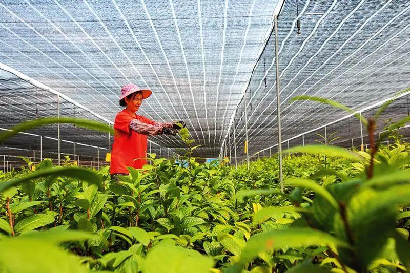 【政策解读】特色产业是什么?该如何发展?有哪些政策扶持?农业农村部最新回复来了!